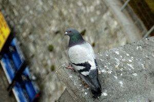 bird control droppings